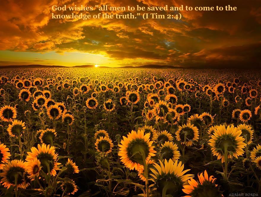 SunflowerSunsetTimothy